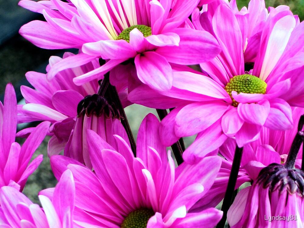 Pretty Pink 2 by Lyndsay81