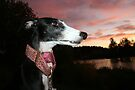 Iola and the sunset by homesick