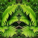 Fern world by Dominique Gwerder