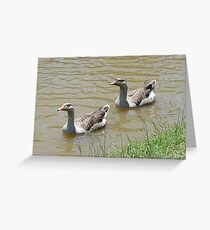 courting Greeting Card