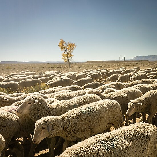 Moving the flock by Brent Olson