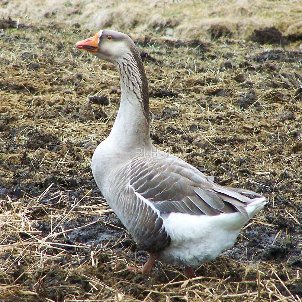 Mother Goose by RLHall