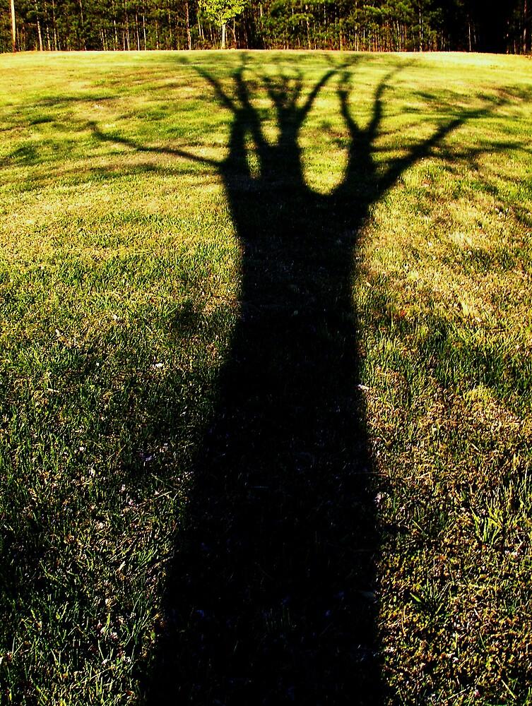 shadow tree by Diana Forgione