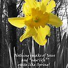 Spring by rebelmomma