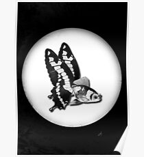 THE BUTTERFLY FISH - JAMES Poster