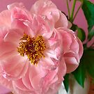 Pink Peony by Christine  Wilson