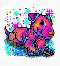 Colour Splash Bull Terrier Pup  Photographic Print
