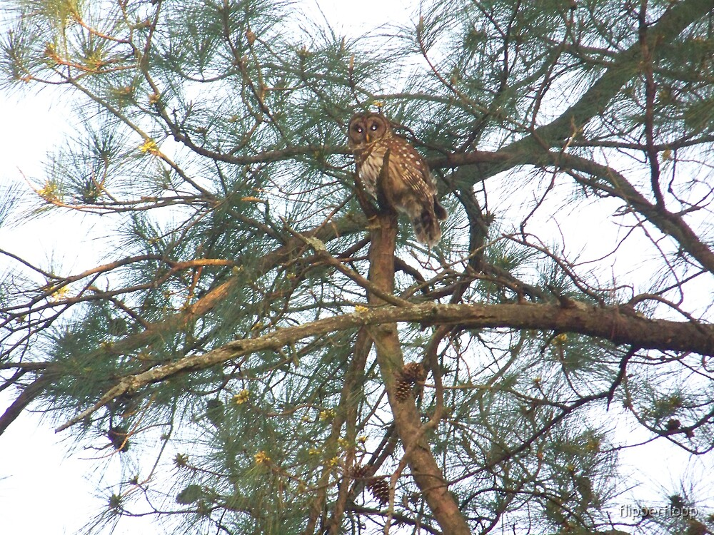 the OWL 2 by flipperflopp