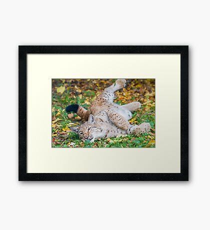 Playful Lynx Framed Print