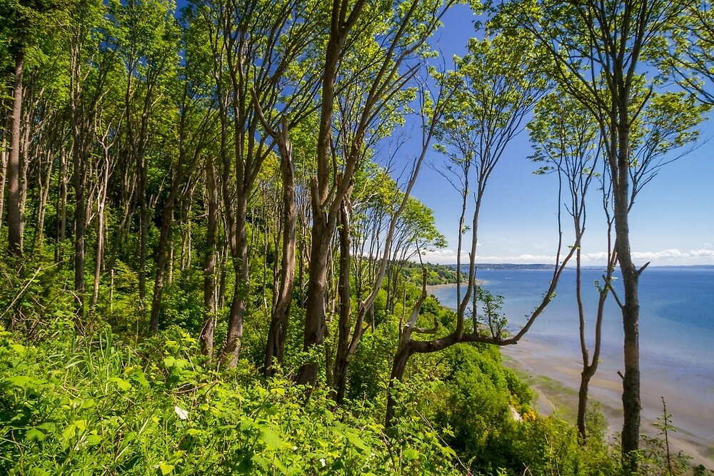 Forests on a Bluff Over the Sound by journeysincolor