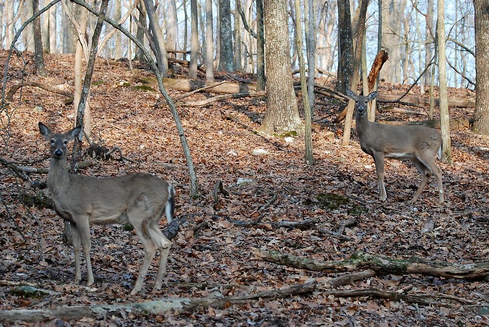 Wild WhiteTail Deer by Jim Caldwell