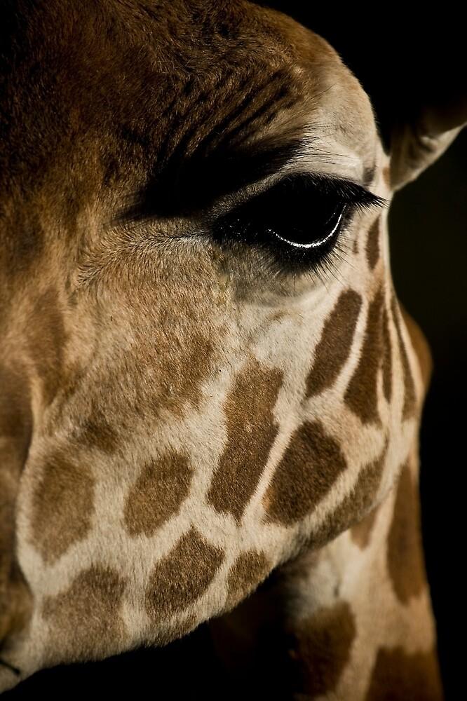 Giraffe Portrait by rosswoodphoto