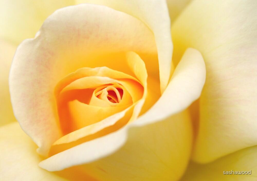 Yellow Rose 2 by sashawood