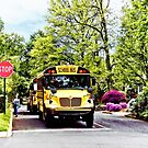 School Buses at Stop Sign in Spring by Susan Savad