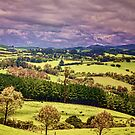 Green Pastures by wallarooimages