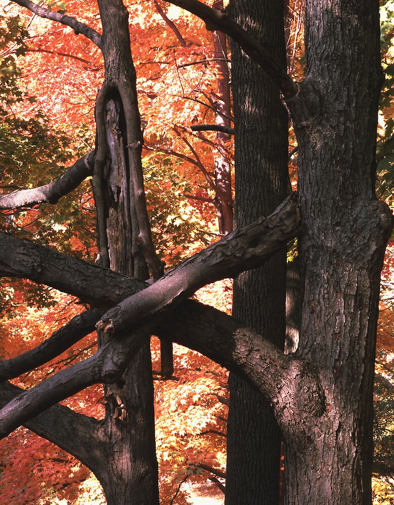 Orange Splash and Interlocked Tree Trunks by halnormank