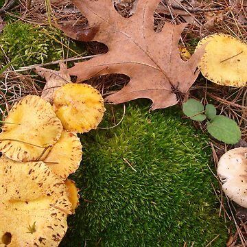Fabulous Fungi - 3 by GraciousSword