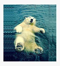 Chillaxing Polar Bear Photographic Print