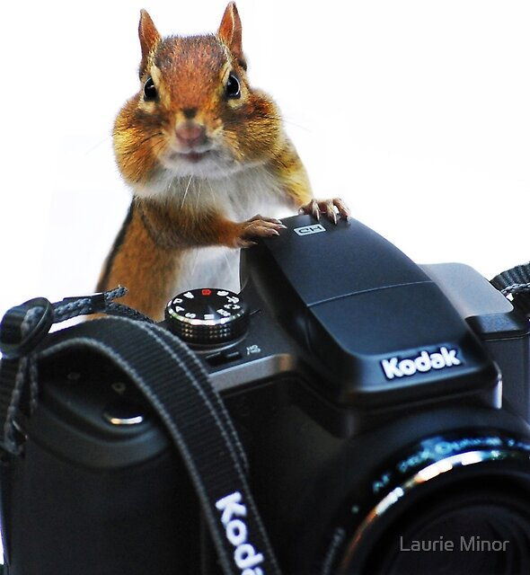 The Photographer's Assistant by Laurie Minor
