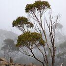 Fog, Mt Wellington, Tasmania Australia by sandysartstudio