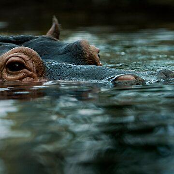 Hippo by fljac