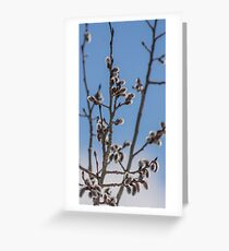 Pussy Willow 1 Greeting Card