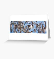 Pussy Willow 3 Greeting Card