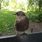 Bird Close-Up, New York City by lenspiro
