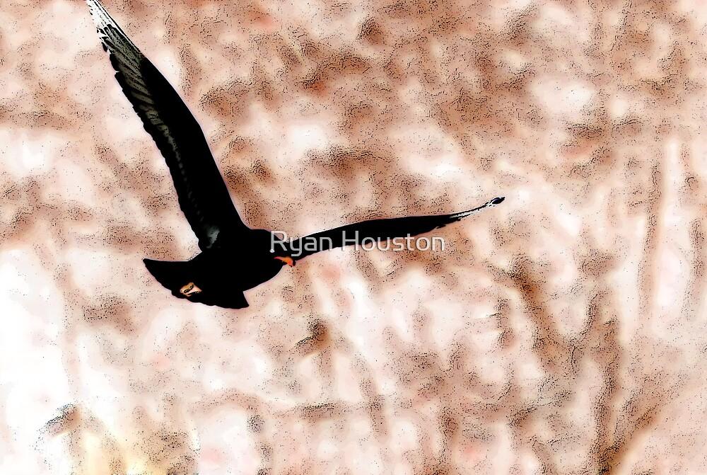 Bird in Flight by Ryan Houston