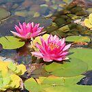 Lovely Garden Pond by hummingbirds