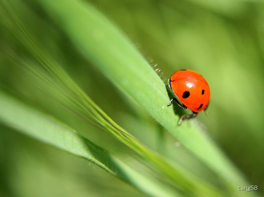 Lady Bug by caryj58