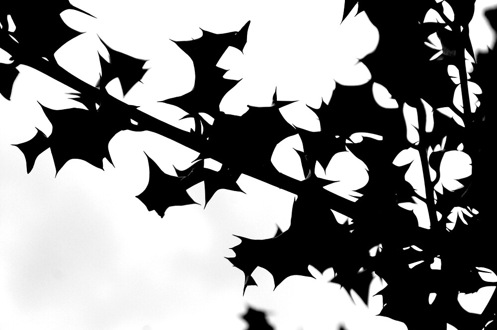Silhouetted holly leaves by kimberleyB