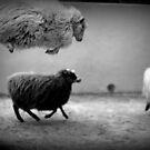 springende Schafe von Marianna Tankelevich
