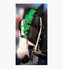 St Patricks Day Shamrocks Photographic Print