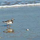 Beach Runner by Bill Morgenstern