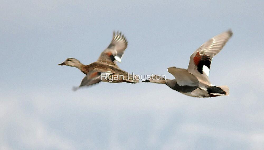 Gadwall Pair in Flight by Ryan Houston