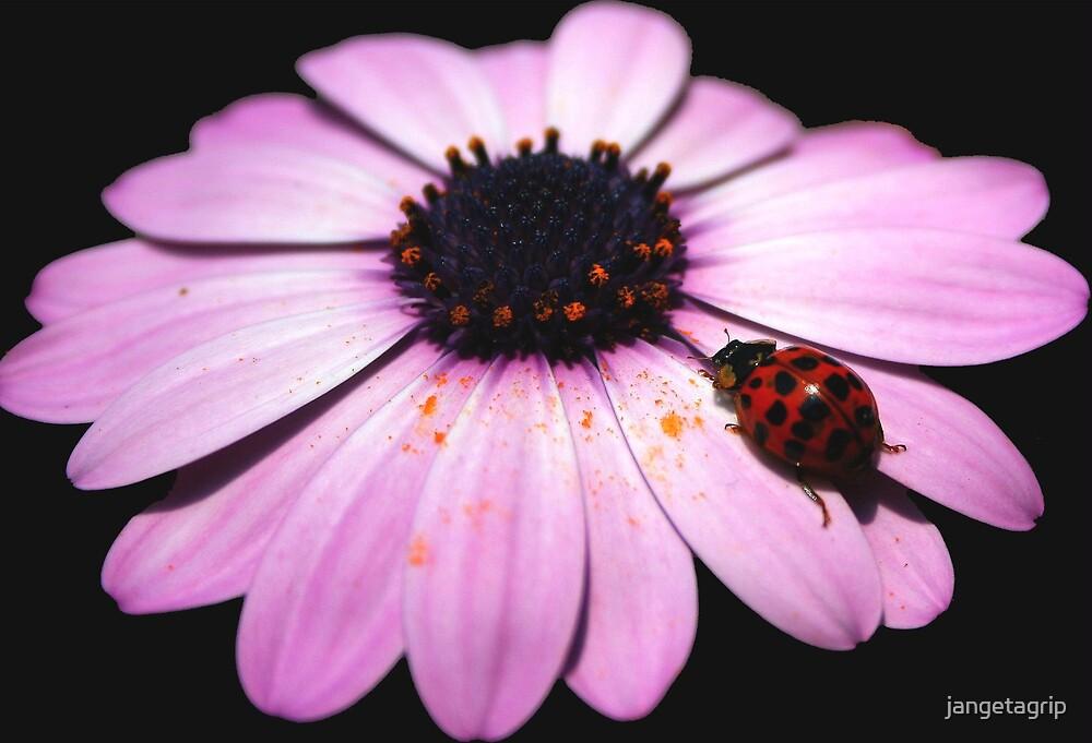 Ladybird ladybird fly away home by jangetagrip