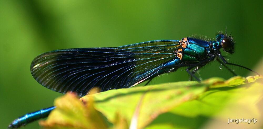 dragonfly by jangetagrip