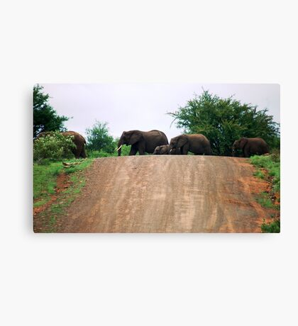 """THE ELEPHANT CROSSING"" Canvas Print"