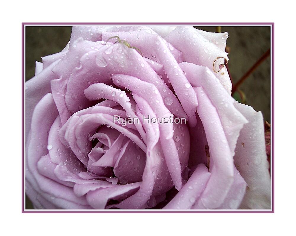 Lavander Rose & Rain by Ryan Houston