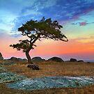 0396 Sunrise panorama by Hans Kawitzki