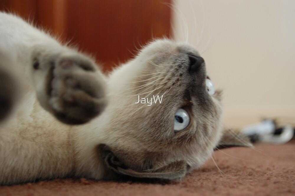 Kitty Cat by JayW