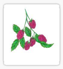 Rasberry Sticker