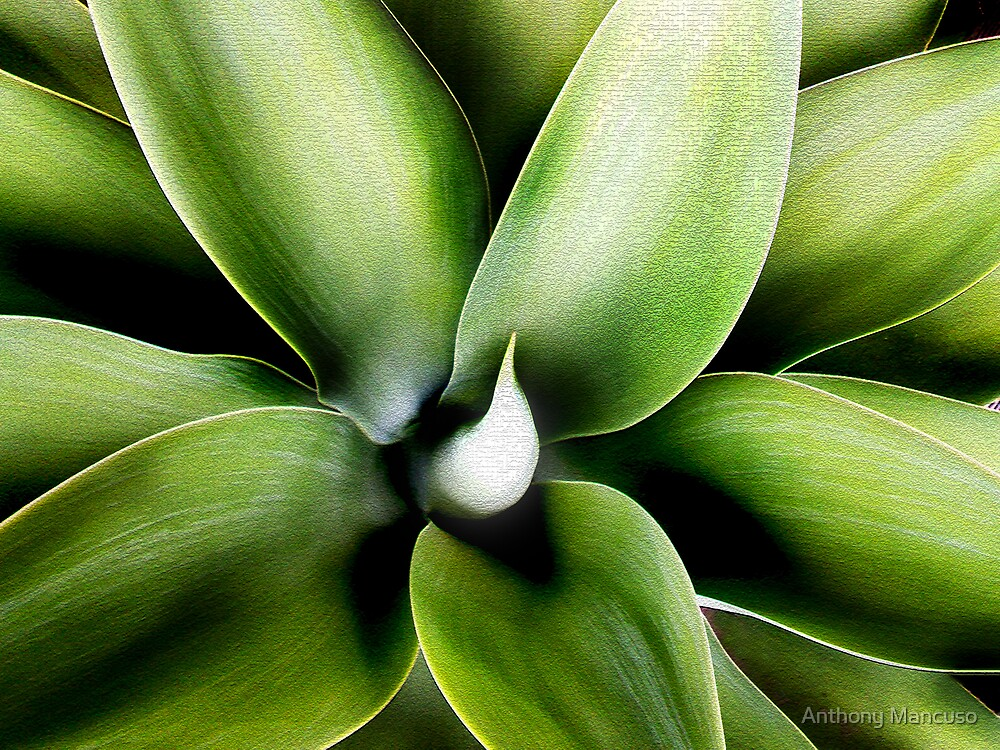 agave by Anthony Mancuso