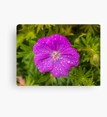 Pink flower macro Canvas Print