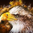 Eagles Fury by shutterbug2010
