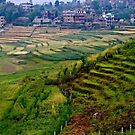Nepal Countryside by Barbara  Brown