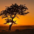 0430 Golden Sunset - Dog Rocks by Hans Kawitzki