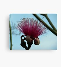 Red Mustache Brush Canvas Print