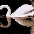 Swan lake by MEV Photographs